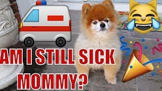 LITTLE BEARS EMERGENCY FOLLOW-UP..HEIDI'S B-DAY w/ THE FAMILY (FUNkee Bunch Vlog w/ Olaf & JADE) lol