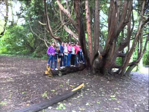 Sri Lanka Girl Guides in Camp 101 Ireland