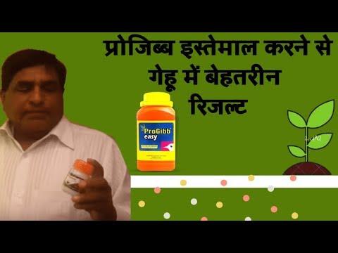 ProGibb in Wheat...increase Production (Hindi) गेहूं का उत्पादन बढ़ाएं