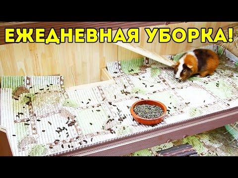 Ежедневная Уборка Стеллажа Морских Свинок / SvinkiShow