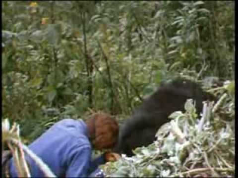 Dian Fossey, Digit's death