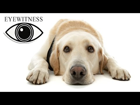EYEWITNESS | Dog | S1E5