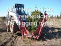 Video On Large Trees We Have Available In Eastern US Bucks Co grower