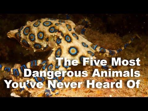 Five Dangerous Animals You've Never Heard Of