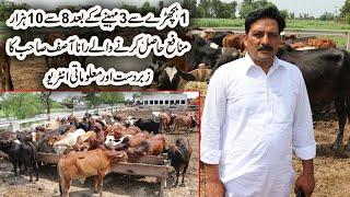 55 Calves Farm in Pakistan | Calf Farming in Urdu | Wacha Farming Pakistan | Calf Farming Business