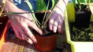 CARNIPLANT-Plantas carnívoras-Cuidados de Sarracenia en Febrero