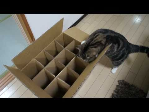 入れない箱とねこ。-The box which Maru can t enter.-