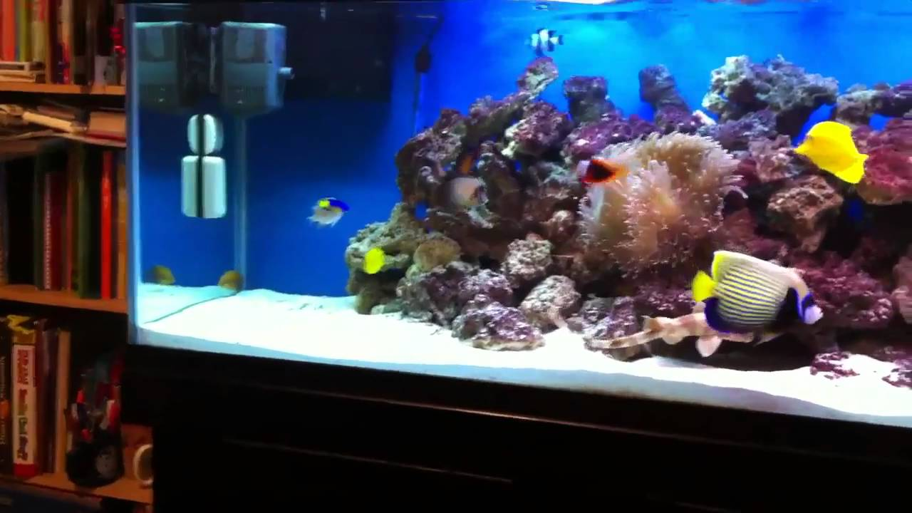 125 gallon saltwater fish tank - YouTube