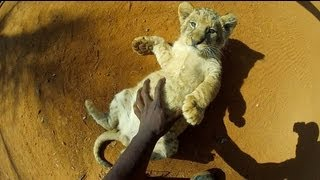 GoPro HD: Baby Lion Hug and Cuddles