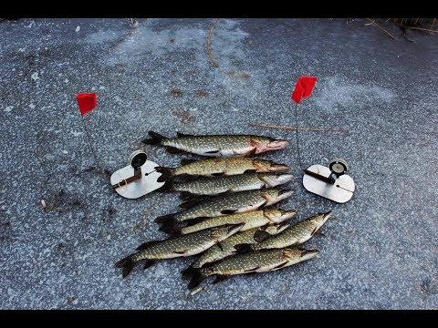 Рыбалка на жерлицы. Первый лед.  Ловля щуки на живца.Улетная рыбалка на жерлицы часть 2.