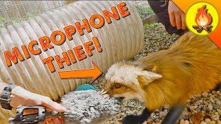 Fox Steals Microphone!