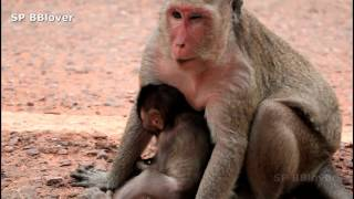 Monkey And Baby 35 - Amari So Mean To Baby Monkey