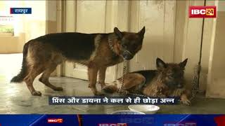 Ajit Jogi Health News: Jogi के बीमारी से उनके पालतू कुत्तों ने छोड़ा खाना    देखें पूरी खबर
