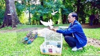 Download Lagu terapi musik klasik untuk burung kicauan v6 Gratis STAFABAND