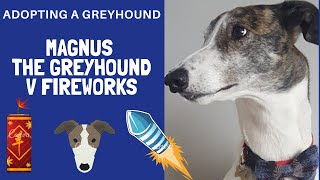 Adopting a Greyhound - Magnus v fireworks
