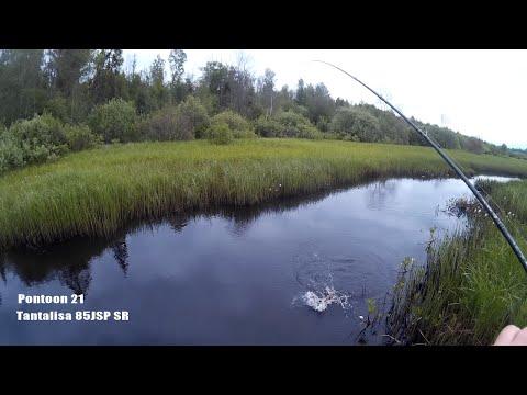 видео ловля щуки в жабовниках видео