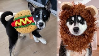 My Puppies Try on Halloween Costumes! (ADORABLE)