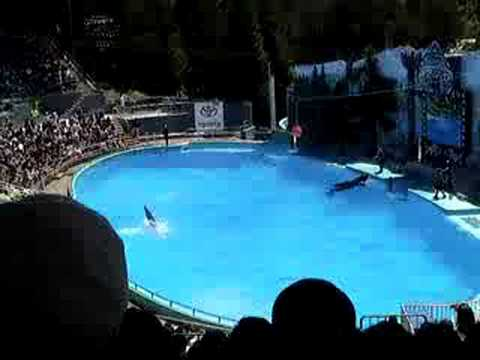 dolphin-killer-whale-duo-show-six-flags-discoverykingdom.html