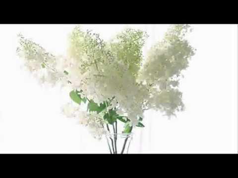 Вивальди Антонио - Preludio From Sonata For Violin Op 2 No 6