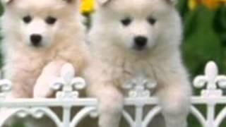 En güzel köpek resimleri süleyman orhan yoksun 03 17