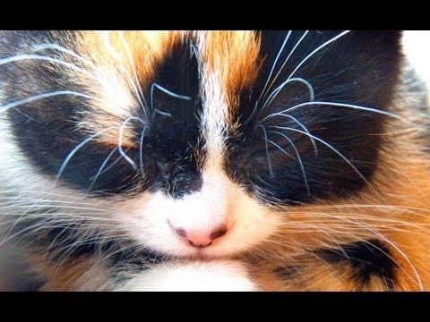 Котенок съел  Муху