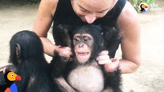 Woman Goes Undercover To Save Baby Chimp