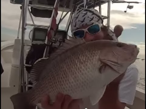 Excellent Snapper fishing and handline Goliath grouper