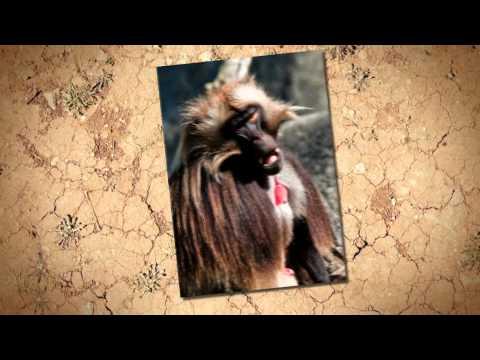 Ethiopian Wildlife video