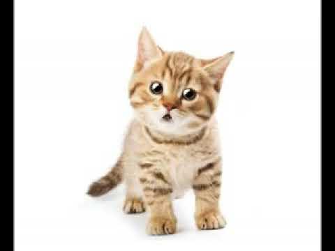 Кот посрал и сошол с ума