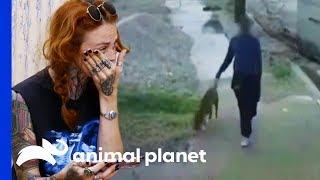 Man Abandoning Dog Outside Villalobos Caught On Camera | Pit Bulls & Parolees