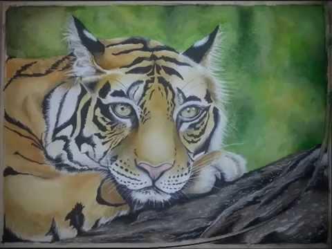 Come disegno una tigre indiana youtube for Disegni di tigri da colorare