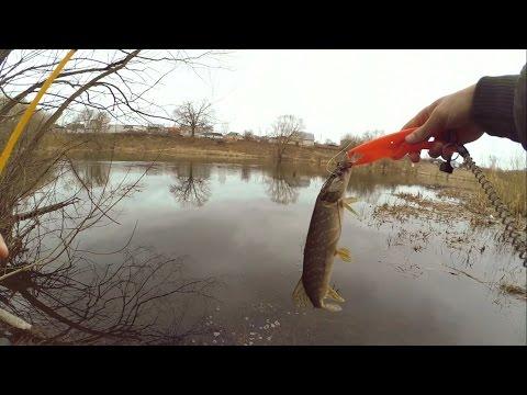 ловля хищника на микроколебалки