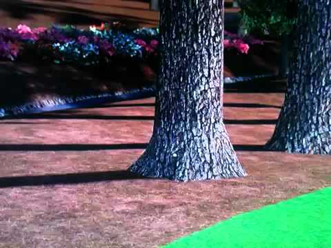 Tiger Woods 2013 - ball climbs tree!