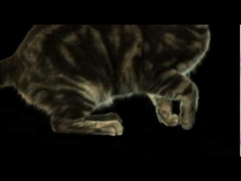 Amazing Slow Motion Leaping Cat