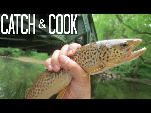 Catch, Clean, Cook. BROWN TROUT!! Fishing White Clay Creek in Late May!