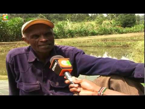 Smart Farm   Tilapia Fish Farming