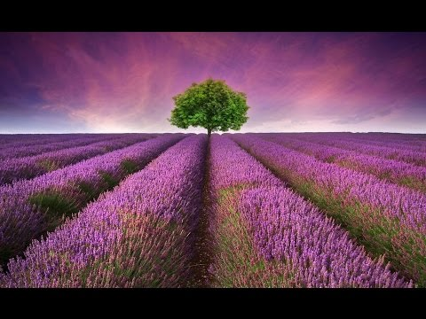8 Hour Deep Sleeping Music: Delta Waves, Relaxing Music Sleep, Insomnia Music, Meditation ☯672