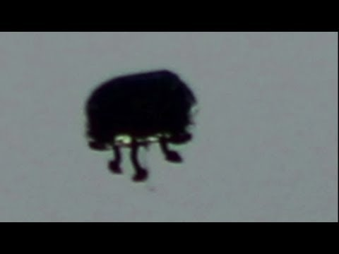 UFO Sighting Strange Alien Entity Incredible UFO Sightings Weekly Update 2013