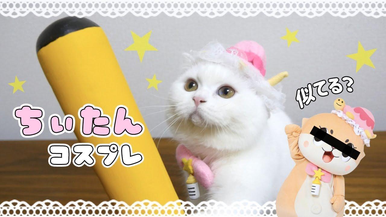 ちぃたん☆の画像 p1_25