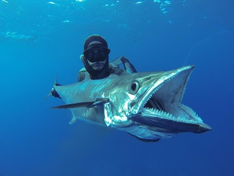 ★ EXTREME BLUE WATER SPEARFISHING -  Mozambique - Dogtooth Tuna / thon dent de chienZanzibar 2012