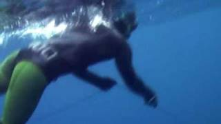 Spearfishing Large Wahoo and a Rhino