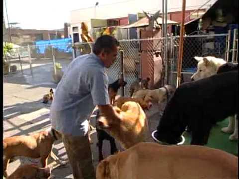 Emberképzés kutyákhoz extra - Cesar Millan