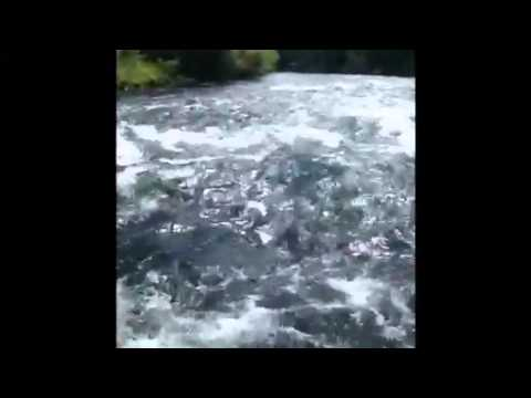Rafting The Wild West | McKenzie River Adventure 2012