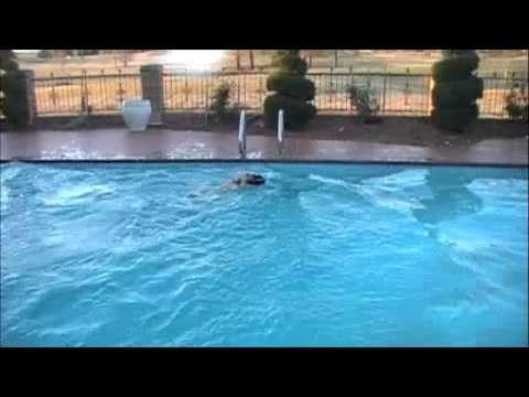 High Dive Into Pool Dog Jumps Off High Dive Into