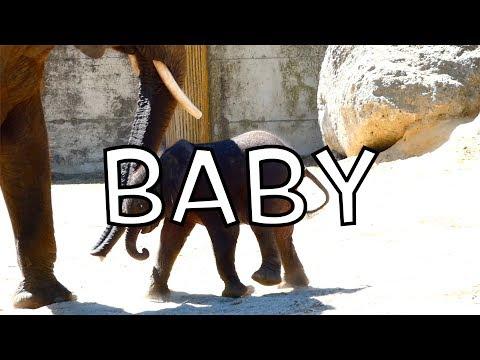 Elefanten Baby Kibali & Mama Numbi. Afrikanischer E. (Loxodonta africana) Lumix dc-fz82 Superzoom