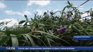 В Сладковском районе полным ходом идёт заготовка кормов