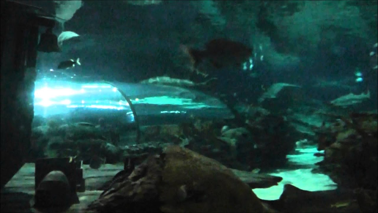 Ripleys Aquarium Of The Smokies Gatlinburg Tn! - YouTube