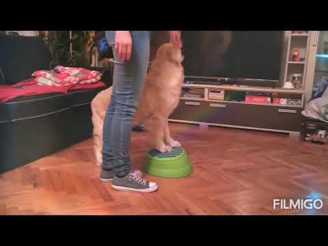 Élménysuli terápiás kutyákkal 8. lecke - Elefánt