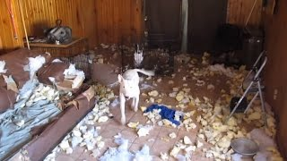 When Owners Are Away, Pets Will Play: See What Happens When You