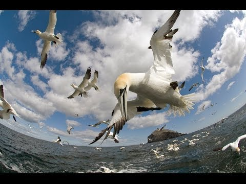 Earthflight (Winged Planet) - Highlights from Earthflight (Narrated by David Tennant)